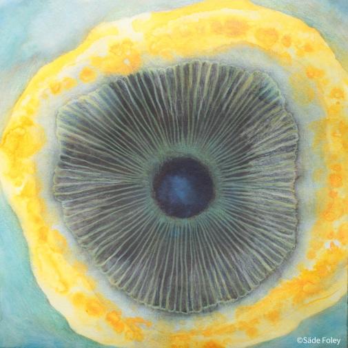 'Orange Mushroom'