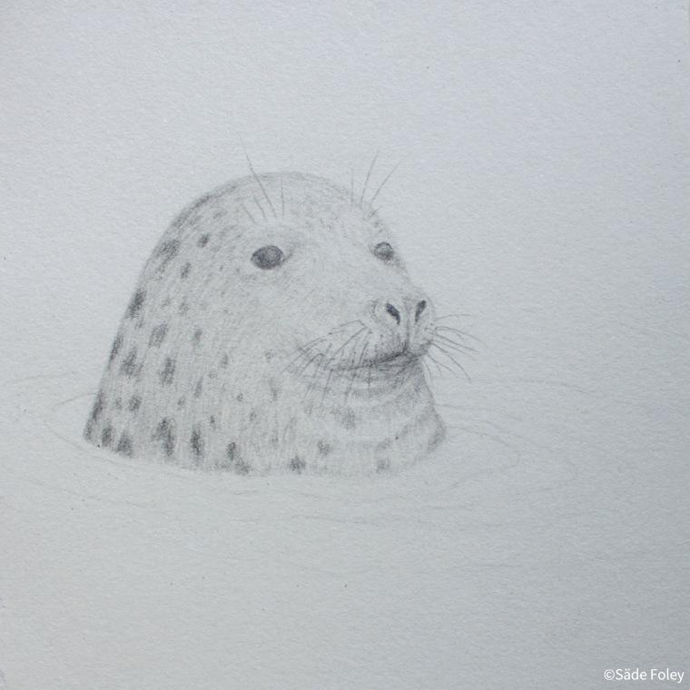 'Seal Head I' 15x15 cm