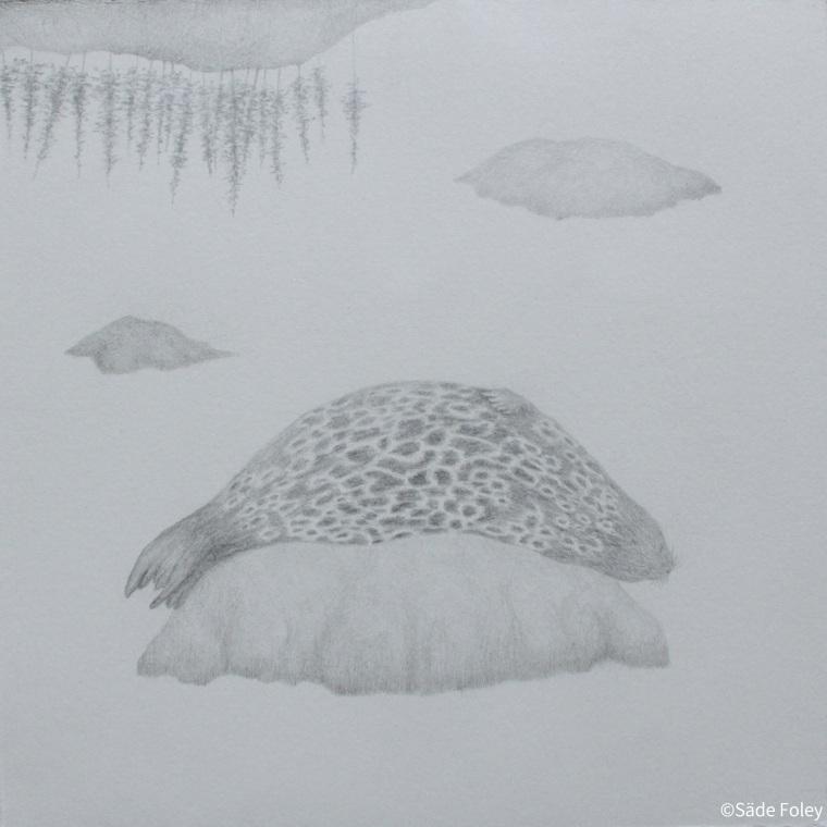 'Seal Lake' 23x23cm
