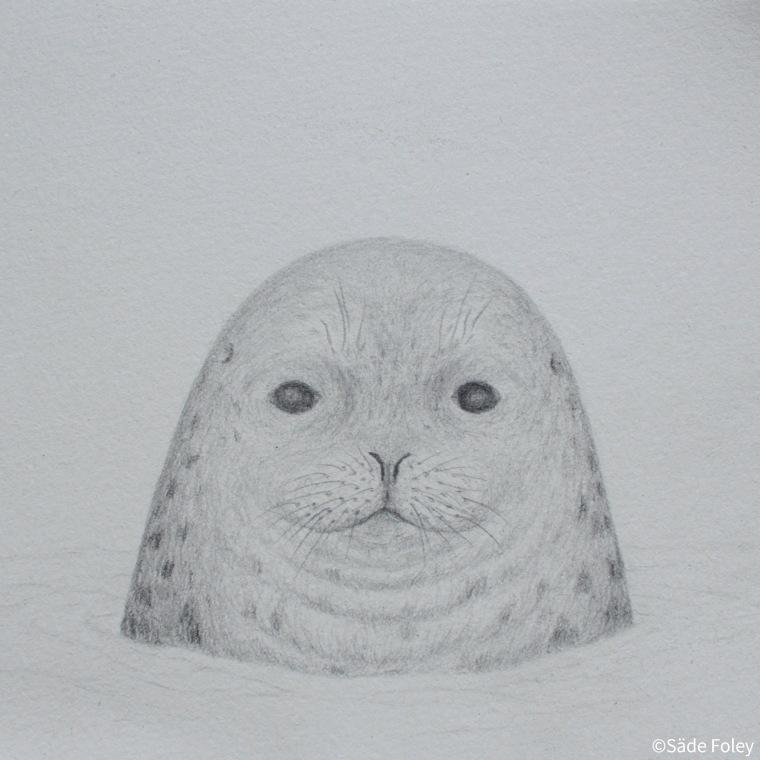 'Seal Head II' 15x15cm